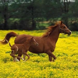 Stáj Kyselý – Jezdecký oddíl